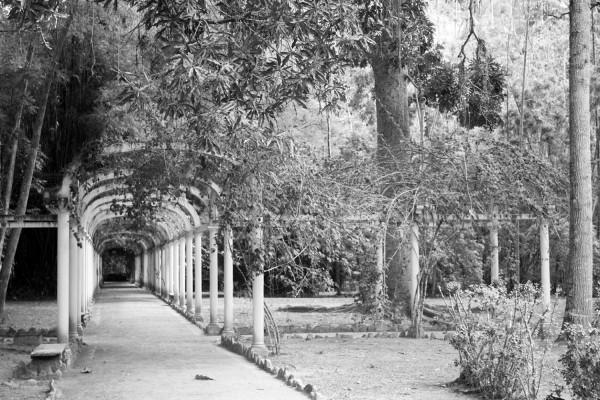 Jardin Botanico de Rio de Janeiro