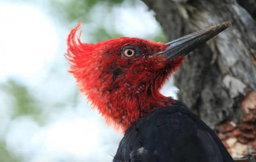 Postularán a Paraguay como sede de feria internacional de aves