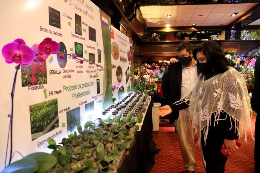 Impactante exposición de orquídeas en el Resort Yacht y Golf Paraguayo