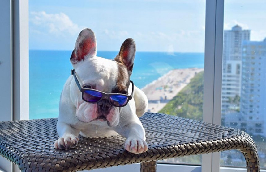 "Nobu Hotel y Eden Roc ahora son ""pet friendly"""