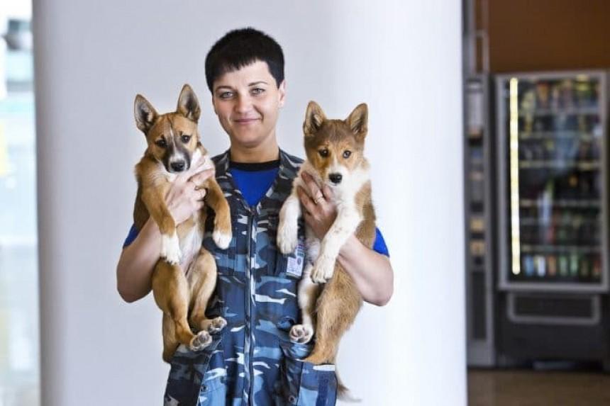 Aerolínea rusa registra su propia raza de perros rastreadores