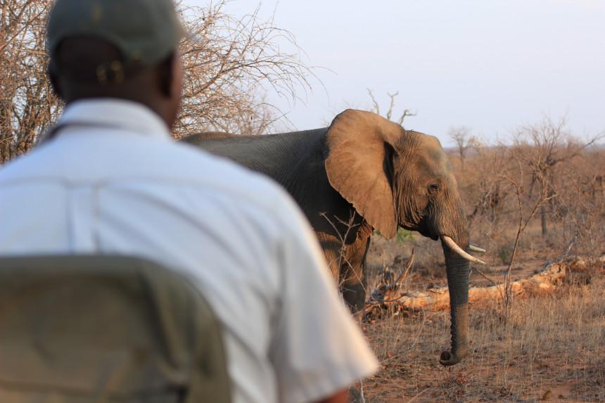 Sudáfrica programa su reapertura al turismo para el 2021
