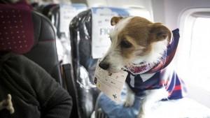 Ahora las mascotas también viajan seguras con ASSIST CARD
