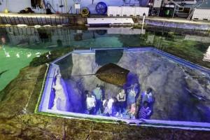En SeaWorld visitantes podrán participar del cuidado de  animales